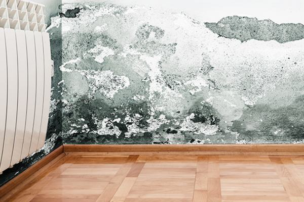 Mold Removal McAlester OK